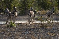 180_Reimund_Huebner_-_Zebras