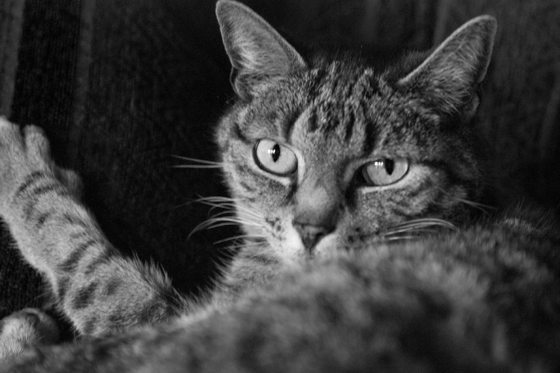 Baerbel Bornhoeft, Katzen_Portrait