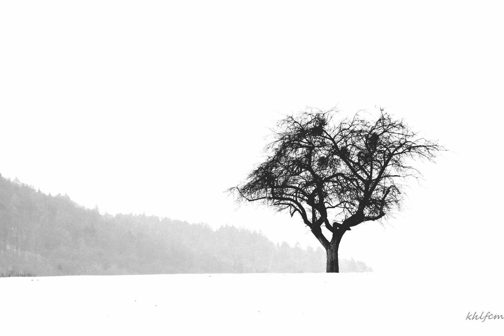 Karl-Heinz Link, Baum Winter
