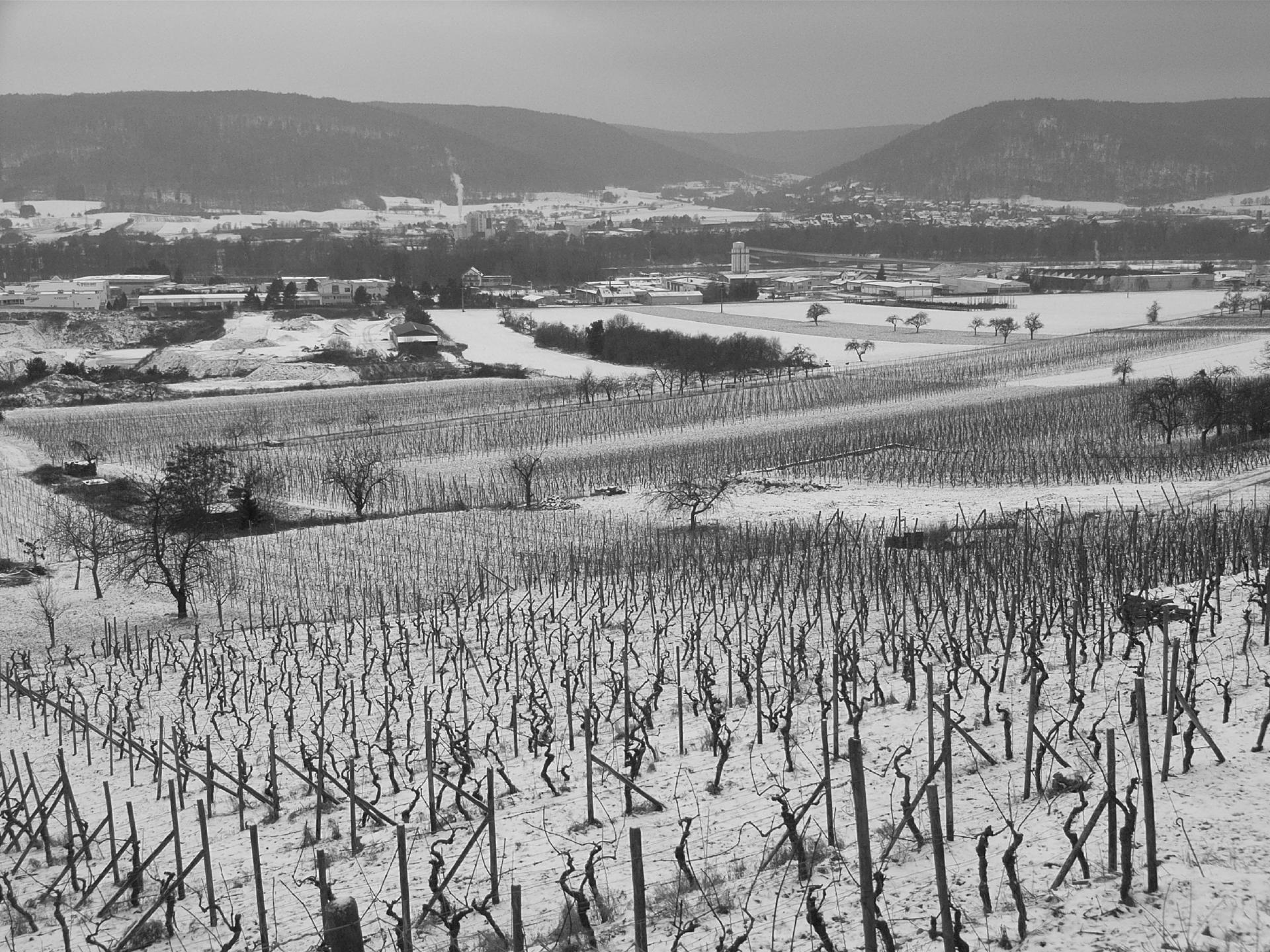 Weinberge in Großheubach