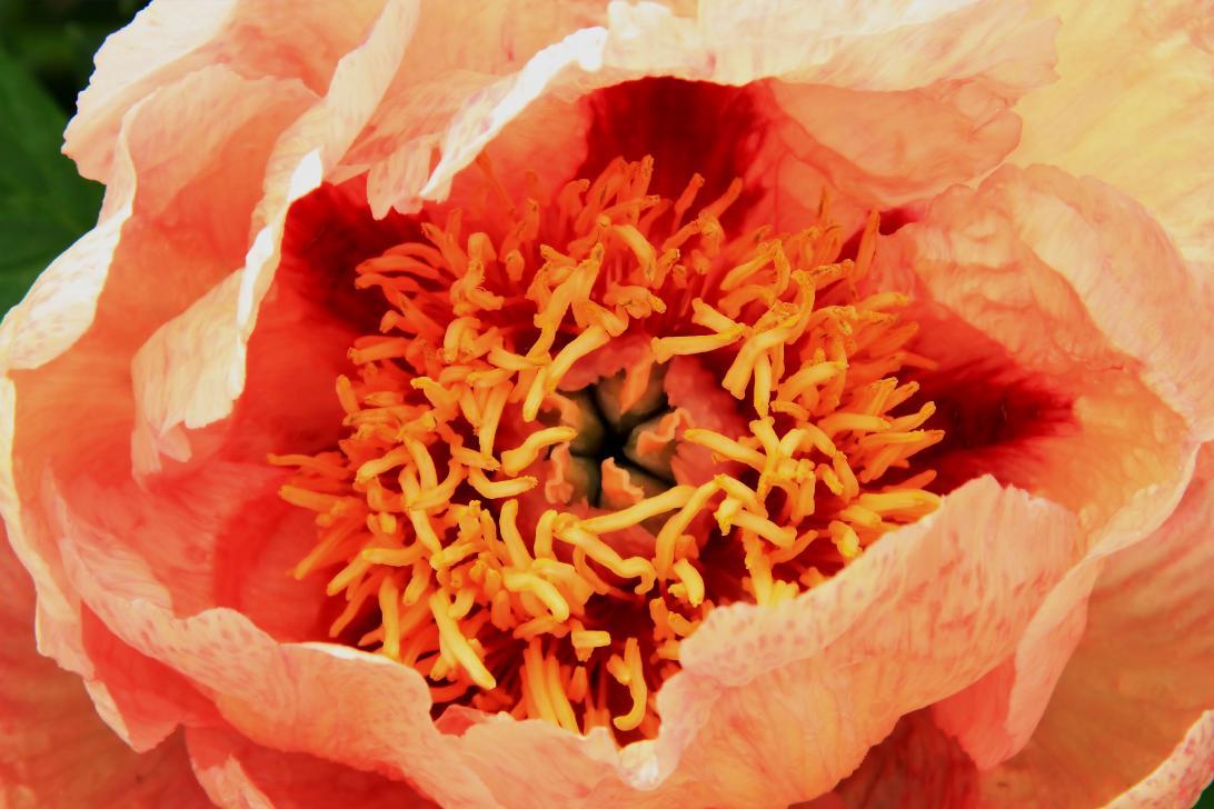 Elke Berberich_Orange