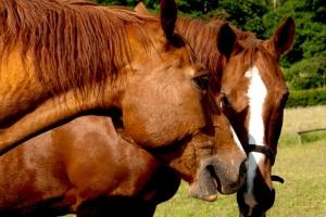 Bärbel_Bornhöft_Pferdegeheimnisse