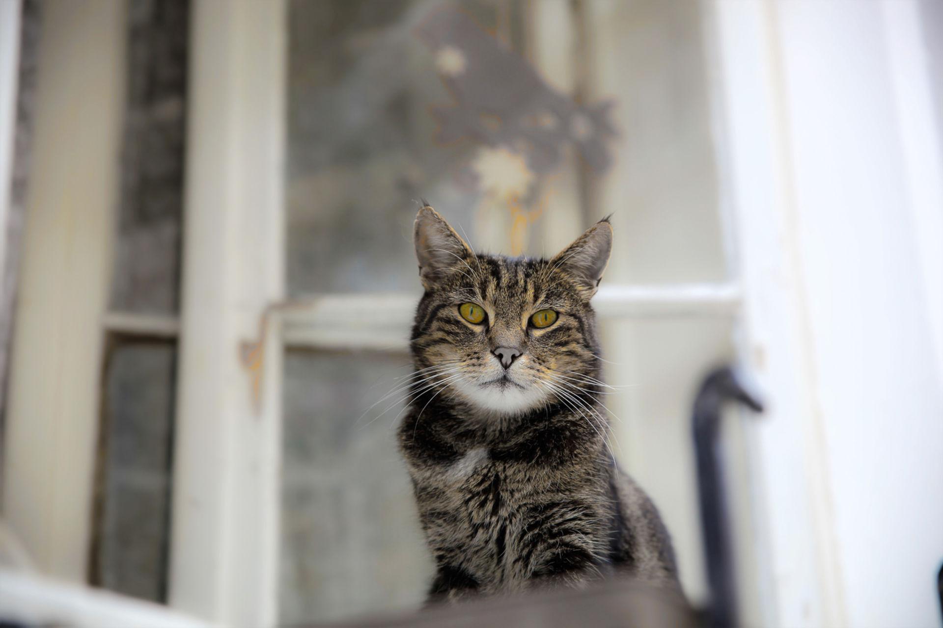 Karl-Heinz Link, Katze_auf_Beobachtungsposten
