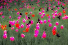 275_Tulpen-Aquarell