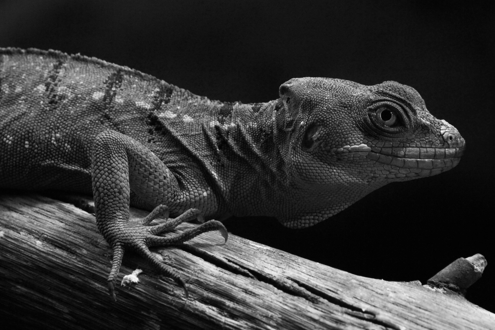 Johannes Wirl, Gecko
