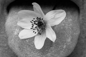 Martin Speth, Blüte