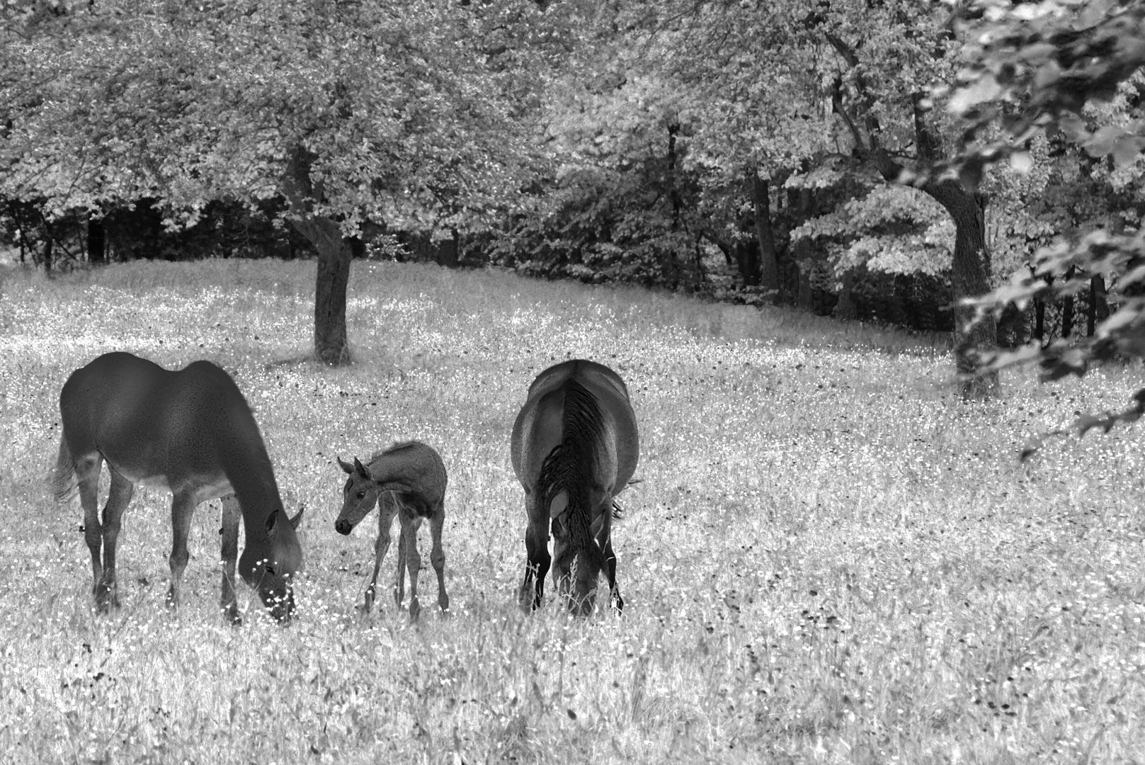 Theo Broßler, Pferdefamilie