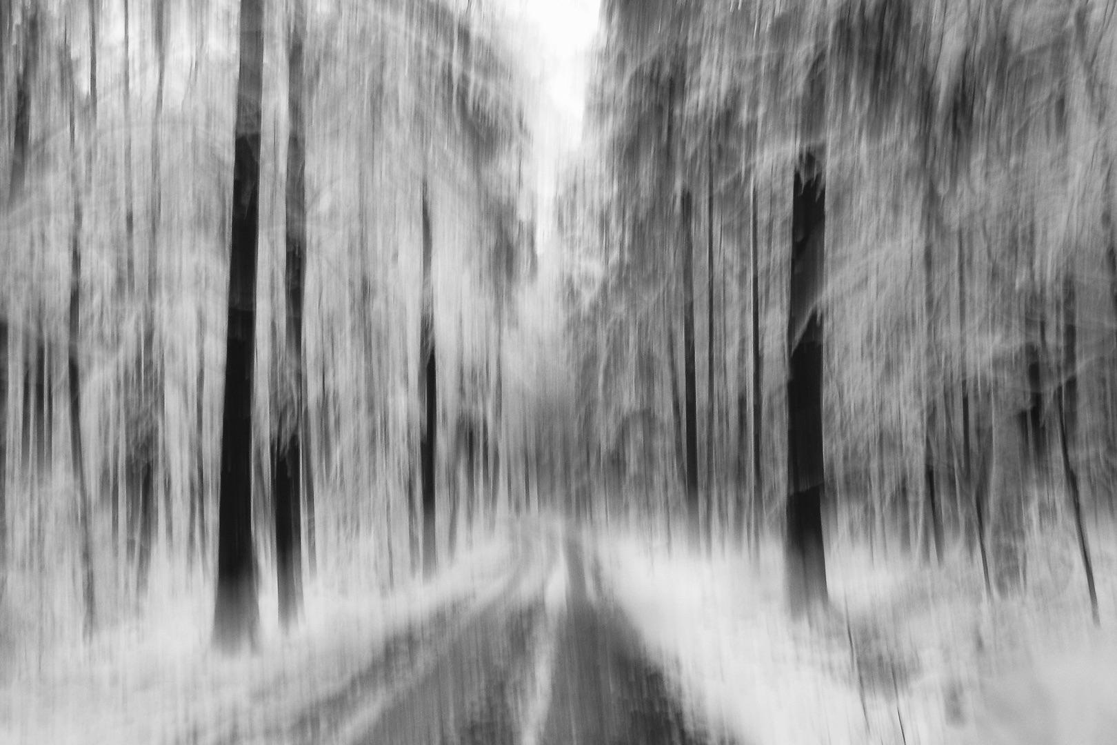 Karl-Heinz Link, Winterwald