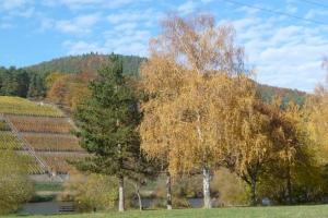 Breitenbach-Annemarie